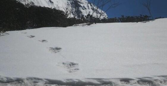 Údajné stopy sněžného muže podle indické ármády