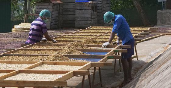 Fairtrade na indickém venkově. Cesta za farmáři, kteří bojují o udržitelný rozvoj