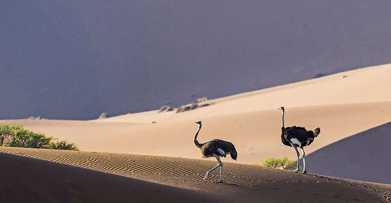 Přírodní klenot jménem Namibie: Neuvěřitelně pestrá africká země, kterou můžete objevovat i řadu let