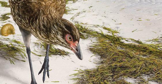 Nečekaný objev praptáka: Kachna z éry dinosaurů přepisuje paleontologické učebnice