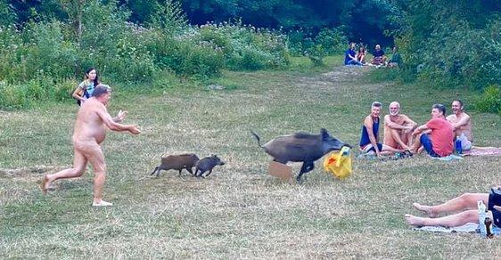 Chyťte to prase! Nahý muž na pláži naháněl divočáka, který mu ukradl tašku, a vznikla série vtipných fotek
