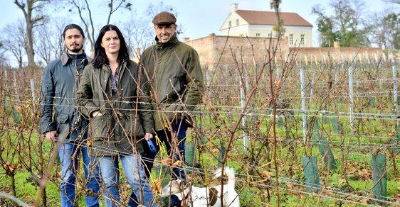 Zlomový ročník: Pandemie nového koronaviru zasadila hlubokou ránu také malým a středním vinařům