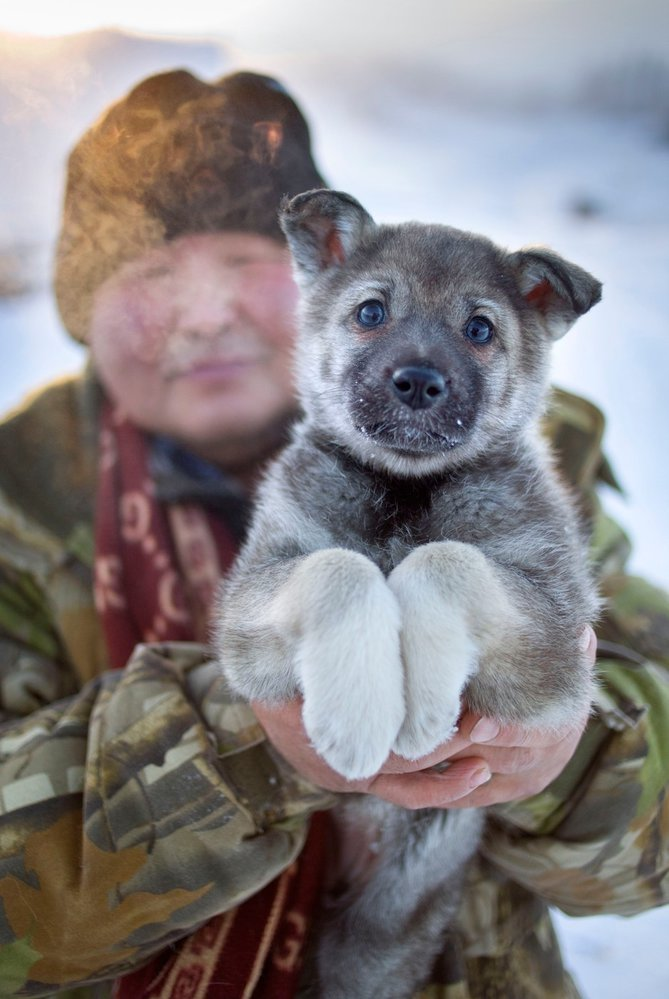 Domácí mazlíčci mrazem v Jakutsku velmi trpí.