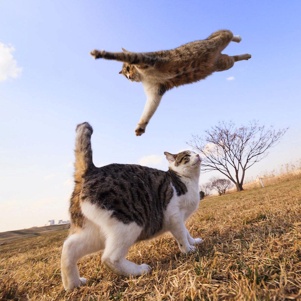 Správný nindža skáče jako nindža