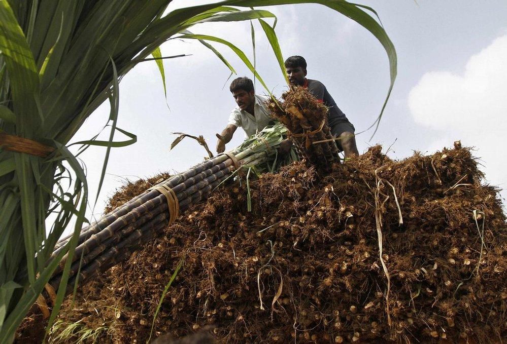Tržní hodnotu cukru ovlivňuje plán Indie zvýšit vývoz do okolních zemí a na Střední východ. Na snímku je vykládka sklizně pro export v jihoindickém městě Čennaj