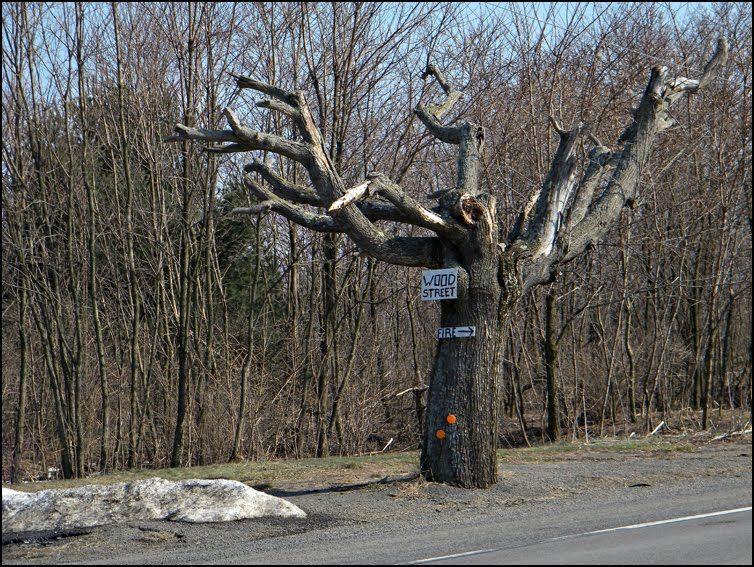 Pennsylvánské město duchů navštěvují adrenalinoví turisté. K ohni je dovede ukazatel na mrtvém stromě.