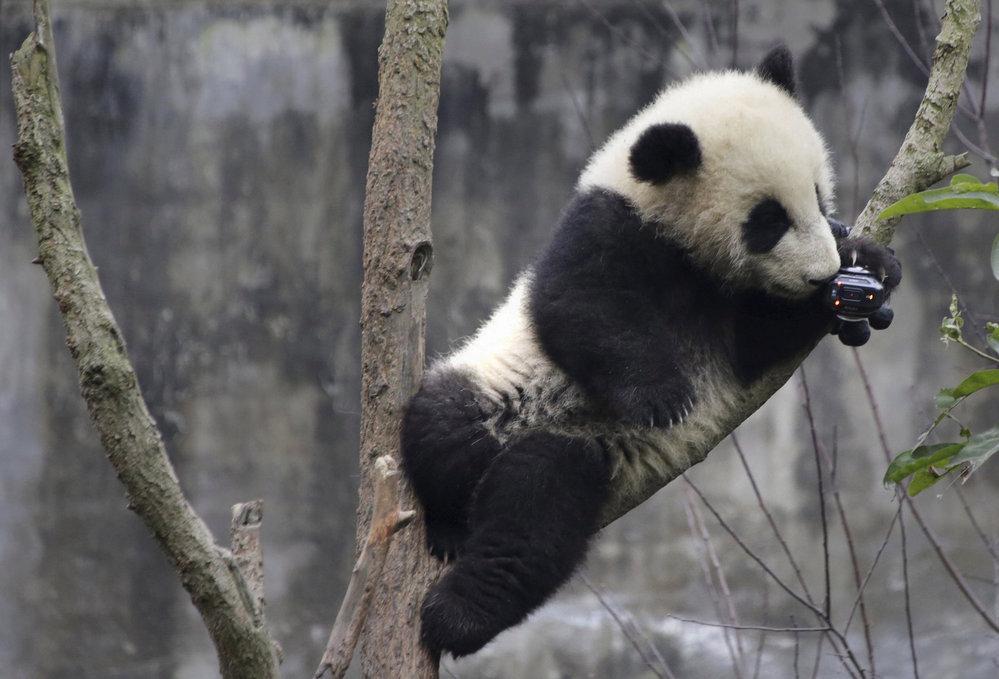 Čína chce vystěhovat 200.000 lidí, aby uvolnila prostor pro pandy