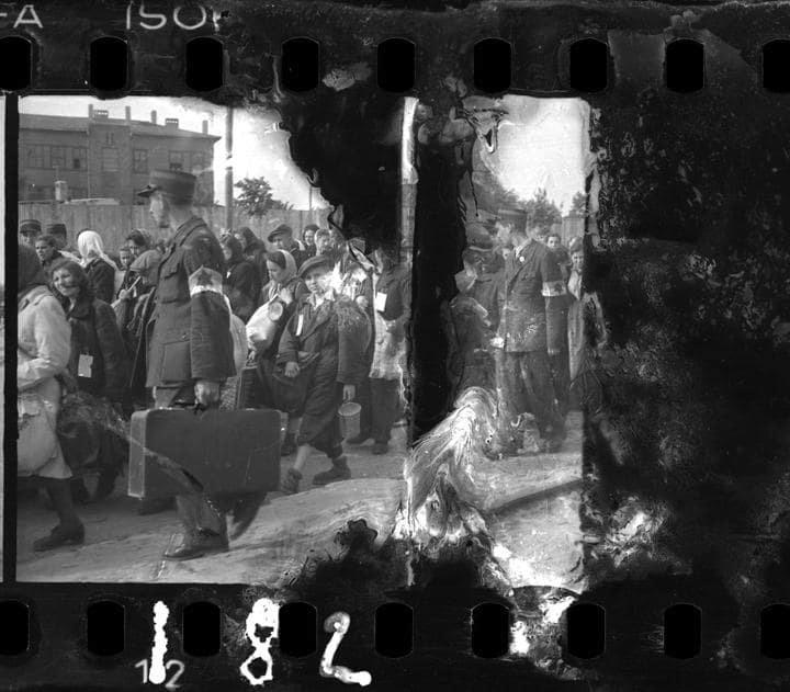 Po osvobození se Ross vrátil zpět do ghetta a zjistil, že více než polovina z ukrytých negativů zůstala nepoškozena.