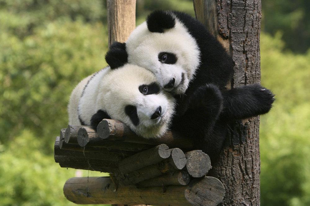 Dočká se Praha pandy od Číňanů?