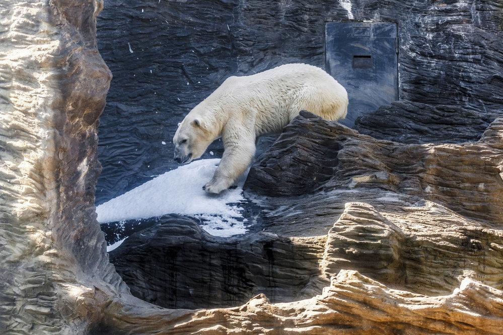 Současný výběh pro lední medvědy