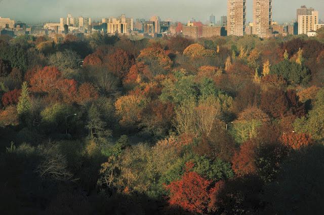 Podzimní Central Park