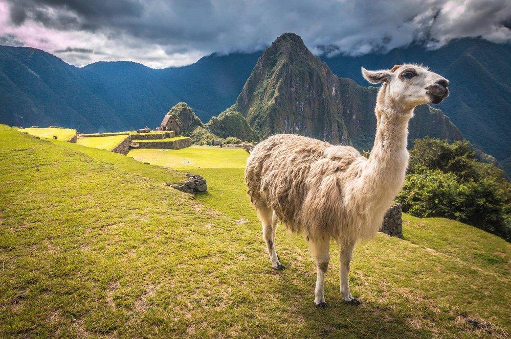 Citadela Machu Picchu byla postavena kolem roku 1450