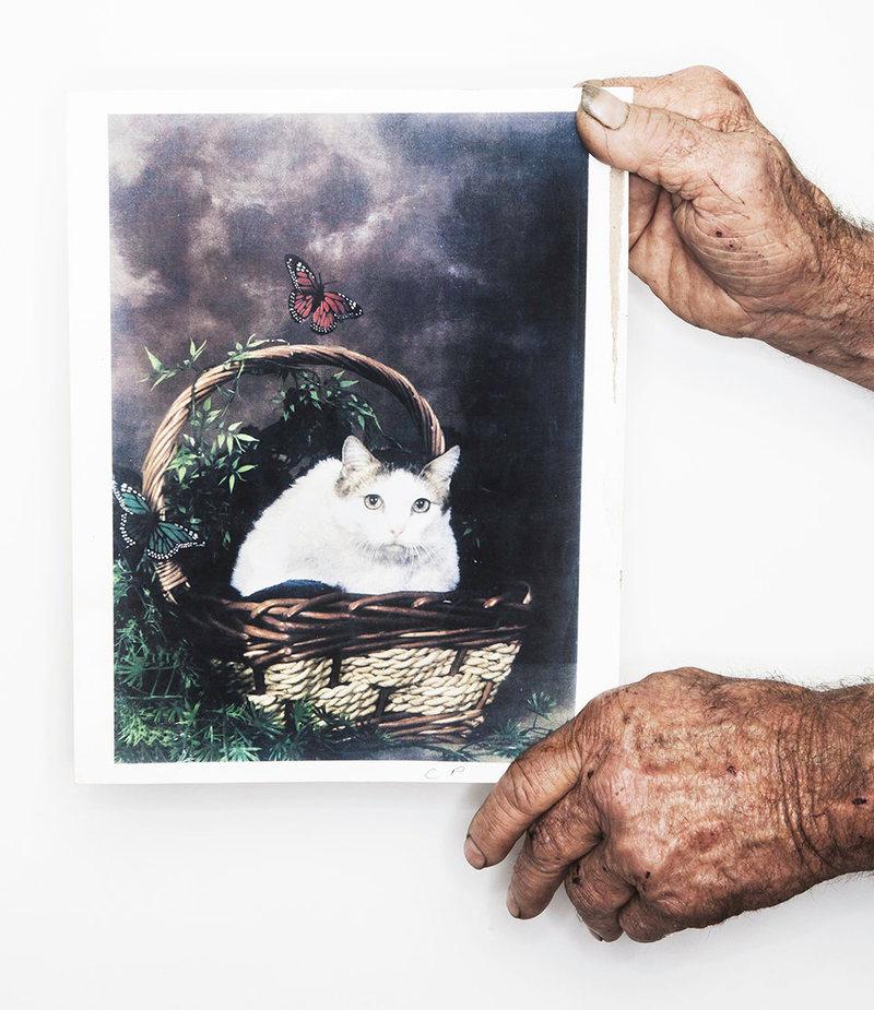 Kočičí rekordmani Jakea Perryho