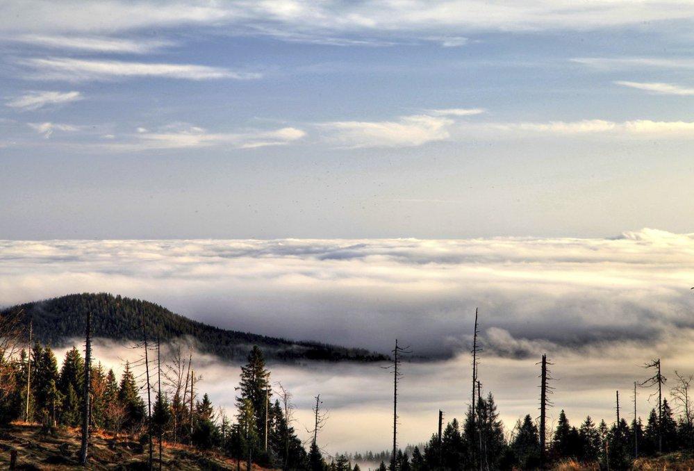Špičky šumavských lesů připomínají ostrovy v moři, když se mlhy válí v údolích.