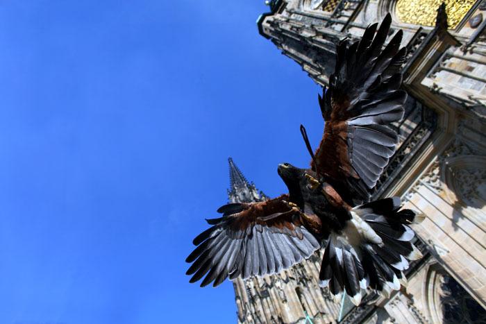 Chrám svatého Víta - symbol české státnosti