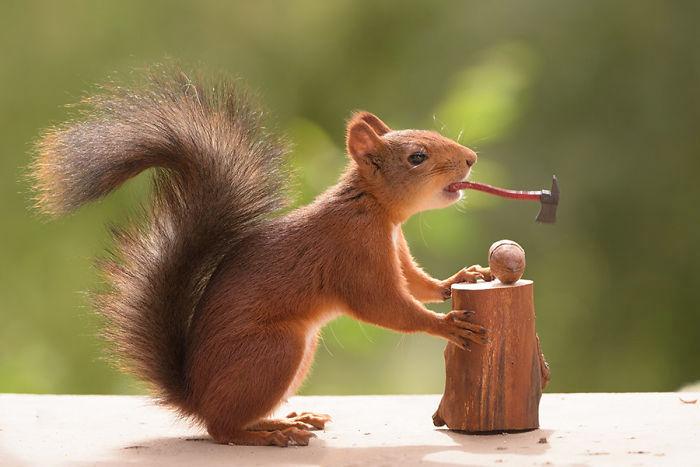GALERIE: Fotograf šest let sledoval život veverek a výsledek je překvapující. Podívejte se na jedinečné snímky | FOTO 3 | Reflex.cz
