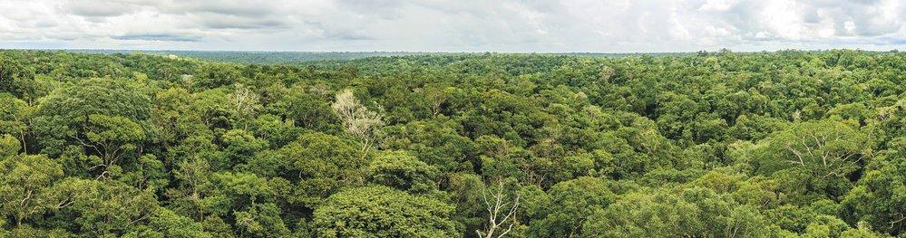 Amazonie v ohrožení