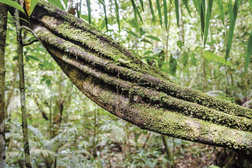 Zelený ráj jménem Brazílie aneb Za přírodním bohatstvím a krásou pátého největšího státu světa