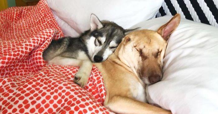 Maggie, roztomilá slepá fenka bez ucha se stala úspěšnou instagramovou psí influencerkou.