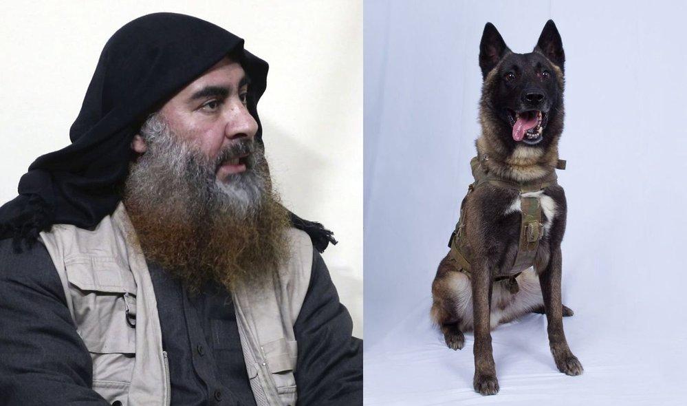 Šéfa ISIS Bagdádího zahnal do slepého tunelu pes Conan. Ze zranění se zotavil