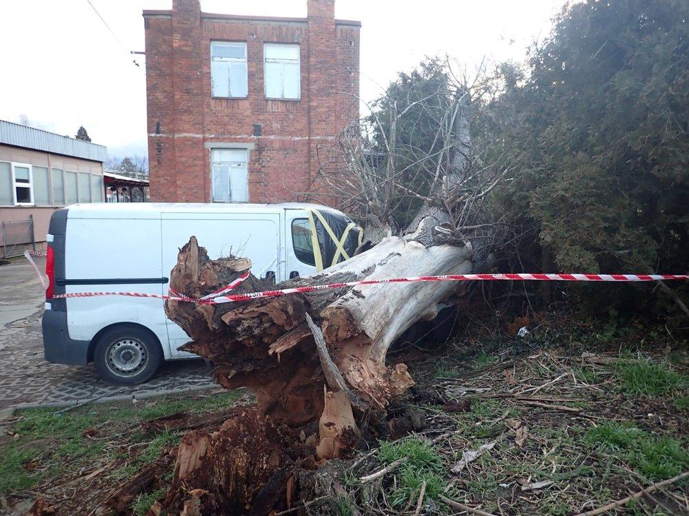 V souvislosti s větrným počasí zasahovali hasiči 11. února 2020 na náměstí T. G. Masaryka ve Zlíně, kde vzrostlý strom spadl na zaparkovanou dodávku.