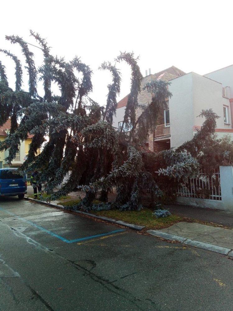 Pražští hasiči pomáhali odklízet vyvrácené stromy (11.2.2020)