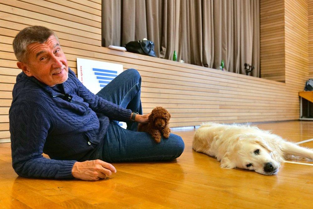Český premiér Andrej Babiš (ANO) si pořídil nového psa. Na twitteru se pochlubil fotografií z průhonické sokolovny, na které pózuje se štěnětem červeného toy pudla jménem Gigi.