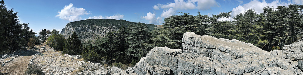 Cedrový les Arz Tannúrín patří k nejhezčím v zemi