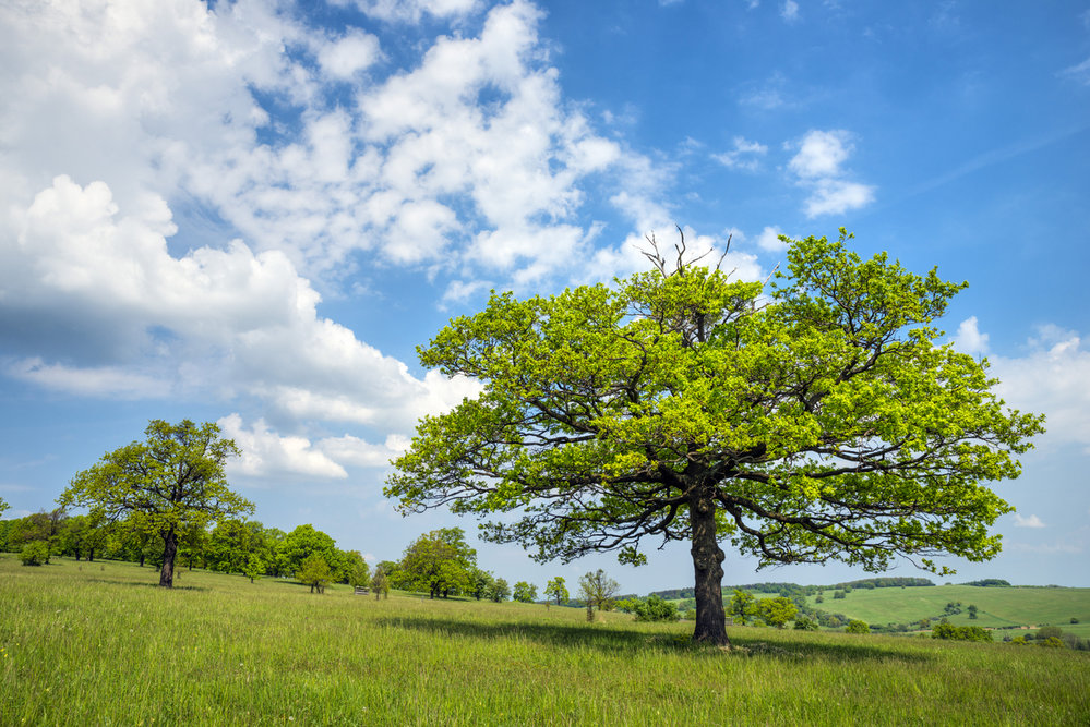 Přírodní rezervace Čertoryje