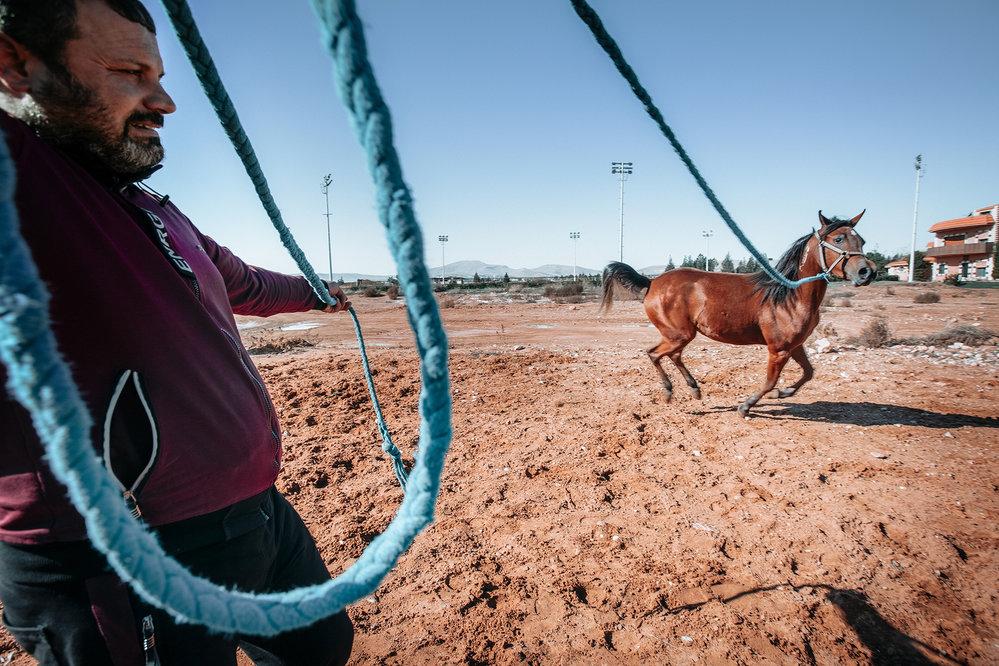 Nominace v kategorii Reportáž: Jarmila Štuková / Váleční koně v Sýrii. Podle Světové organizace arabských koní (WAHO) se z 8500 registrovaných arabských koní na 3000 ztratilo v syrské občanské válce.