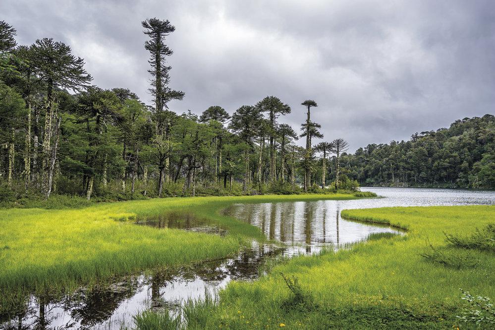 Cíp jezera El Toro se vzrostlými araukáriemi