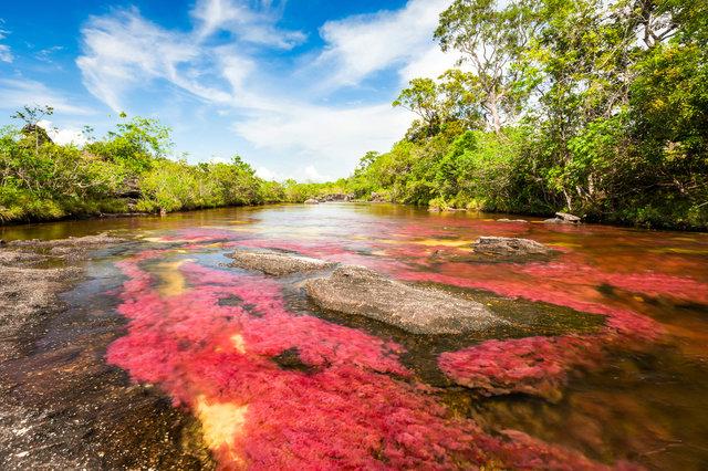 Cristales se říká řeka pěti barev