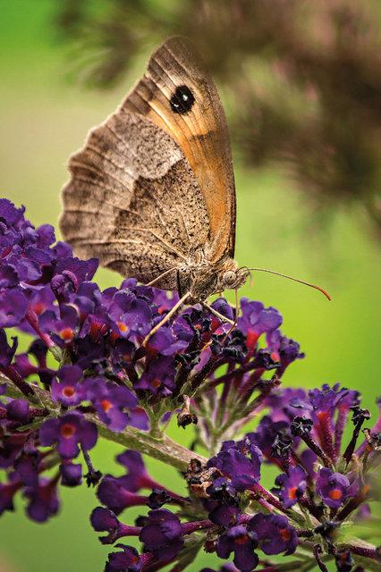 Motýlárium vestředočeských Voticích