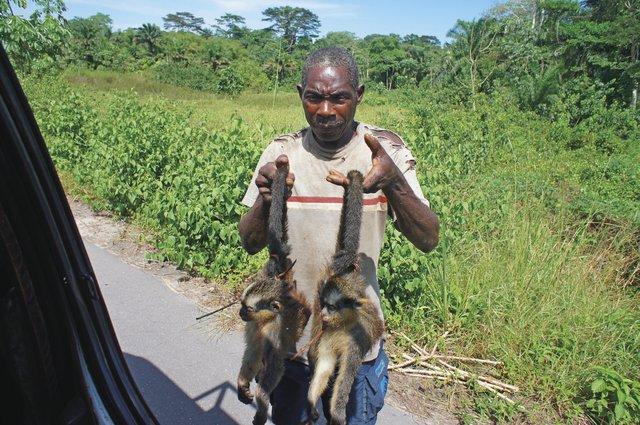 Pytlák prodávající mrtvé opice, Kongo