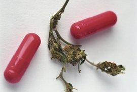 Medicínská marihuana: Zdravý rozum zvítězil ale není to legalizace!