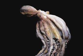 Všeobecná hrůza z toho potkat takové stvoření při koupáni je při pohledu na chobotnici celkem pochopitelná..