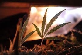 Washington legalizoval marihuanu. A co my?