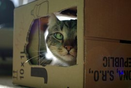 Cpe se vaše kočka i do krabice od nového telefonu? Záhada vyřešena, nemůže si pomoct