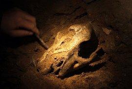 Nález jeskynního lva v Barové jeskyni