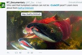 Vědci soutěží o nejroztomilejší zvíř na Twitter
