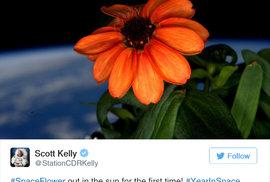 První vesmírná květina dává naději, možná budou brzy realitou marťanské brambory Matta Damona