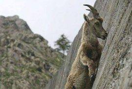 Nejlepší horolezci ze říše zvířat