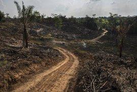 Řeku ohrožuje těžba dřeva.