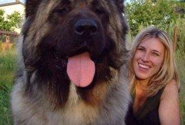 Pozor, hodný, ale hrozně velký pes!