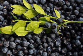 Češi loni nasbírali lesní plody za 6 miliard, letošní sezona má již první otravu houbami