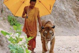 O tygrech a lidech