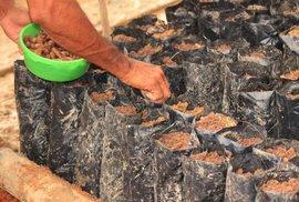 Výprava za kakaovými farmáři do Ghany