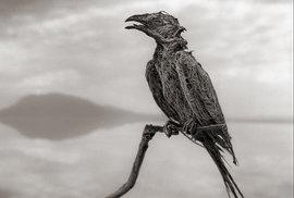 Když v jezeře Natron zemře zvíře, je dokonale zachováno v podobě, která připomíná zkamenělinu