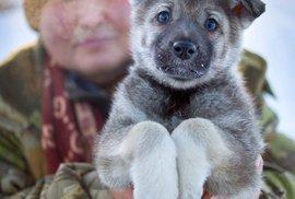 Nejchladnější místo na Zemi: V ruské vesničce Ojmjakon naměřili -71,2 °C!