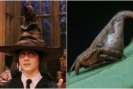2952564f5bc Fantastická zvířata v reálu  Vědci pojmenovali pavouka podle postavy z  Harryho Pottera